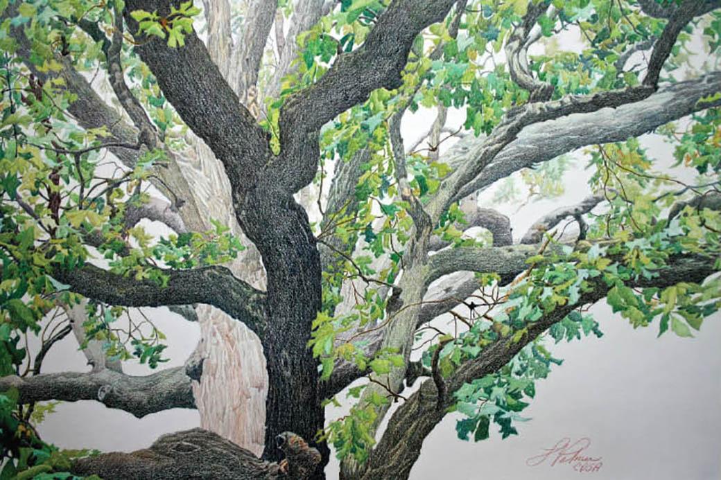 Arkansas Champion Trees: An Artist's Journey